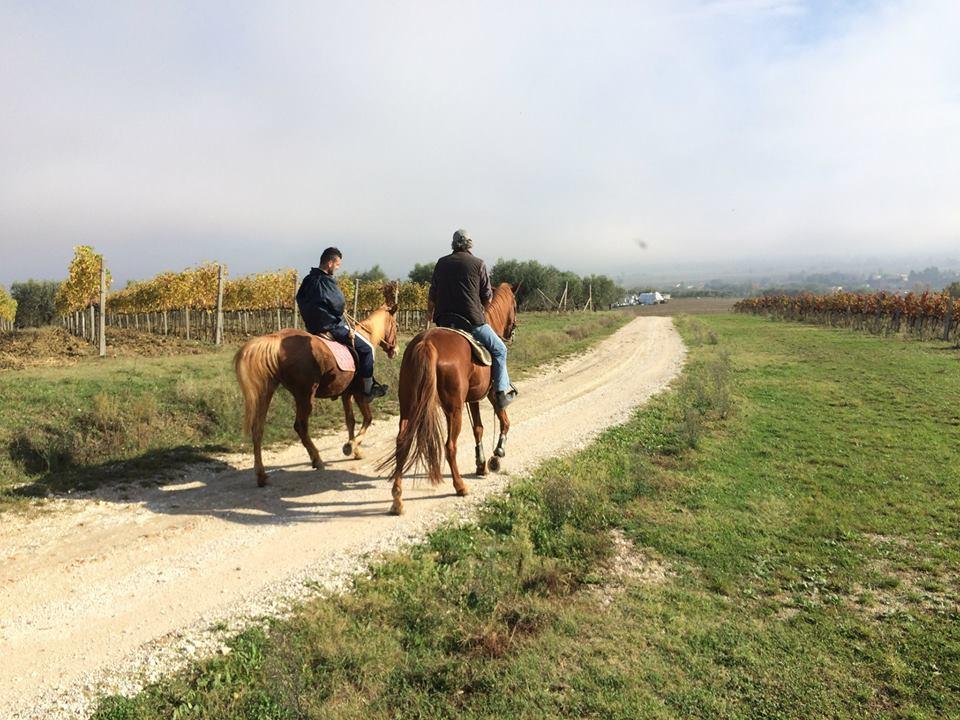 Piandarca Horses